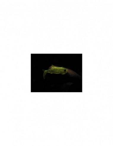 Shad Orka Gegule 7cm, culoare G5 - 5...